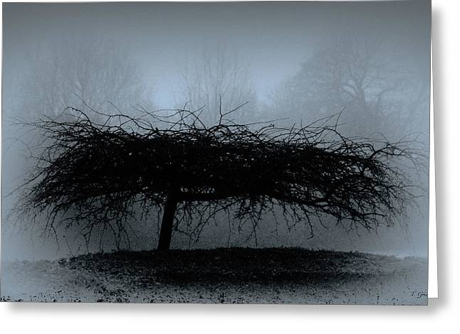 Atmoshperic Greeting Cards - Middlethorpe Tree In Fog Blue Greeting Card by Tony Grider