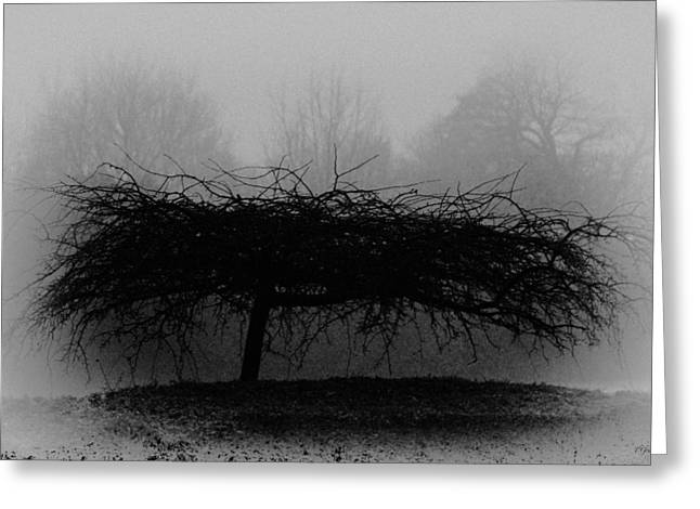 Tony Grider Greeting Cards - Middlethorpe Tree In Fog Bw Greeting Card by Tony Grider