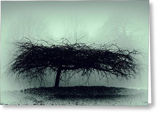 Tony Grider Greeting Cards - Middlethorpe Tree In Fog Gray And Green Greeting Card by Tony Grider