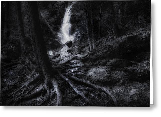Tree Roots Photographs Greeting Cards - Midnight Falls Greeting Card by Bill  Wakeley