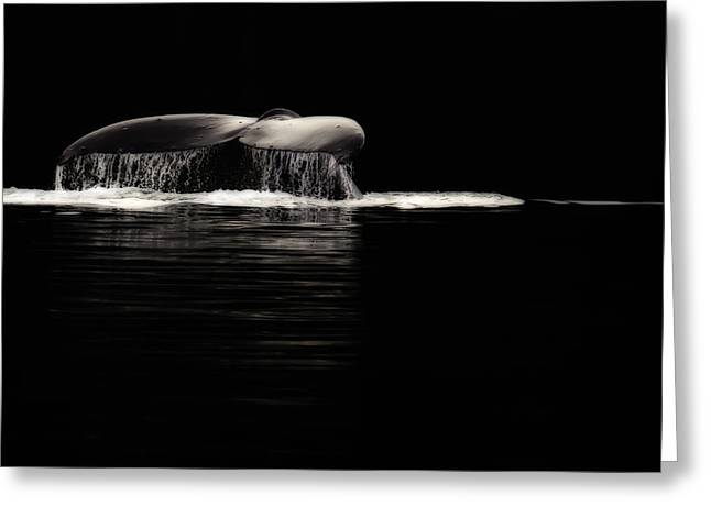 Whale Tail Greeting Cards - Midnight Humpback Greeting Card by Janet Fikar
