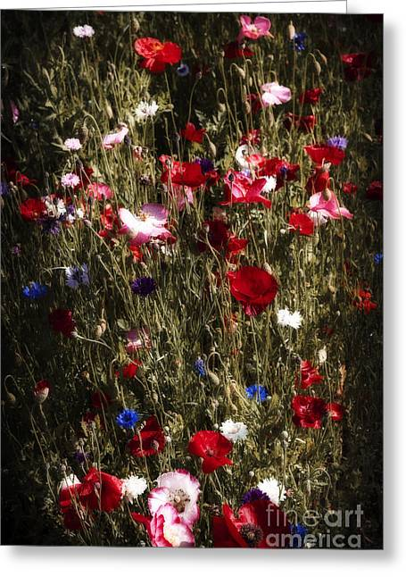 Various Greeting Cards - Midnight Poppies Greeting Card by Elena Elisseeva