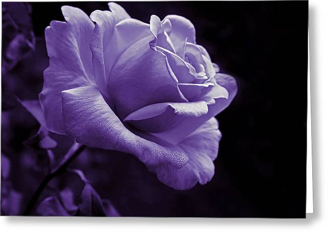 Purple Roses Greeting Cards - Midnight Rose Flower in Lavender Greeting Card by Jennie Marie Schell
