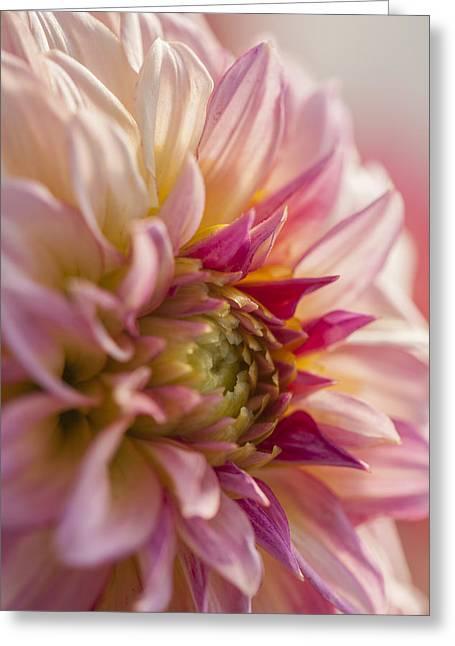 Daysray Photography Greeting Cards - Midsummer Dream Greeting Card by Fran Riley