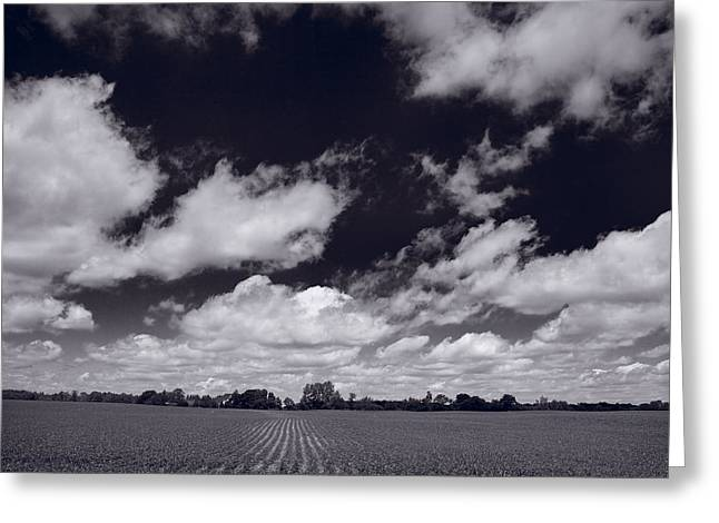 Organic Photographs Greeting Cards - Midwest Corn Field BW Greeting Card by Steve Gadomski