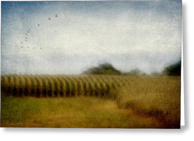 """soft Focus"" Greeting Cards - Midwestern Drive-By Corn Fields Greeting Card by Carol Leigh"