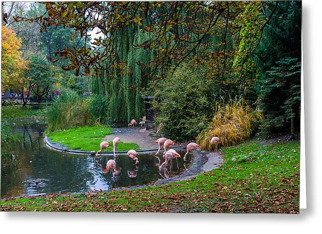Pond In Park Greeting Cards - Mighty legs Greeting Card by Tgchan