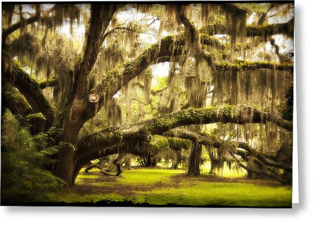 Mighty Live Oak Greeting Card by Barbara Kraus - Northrup