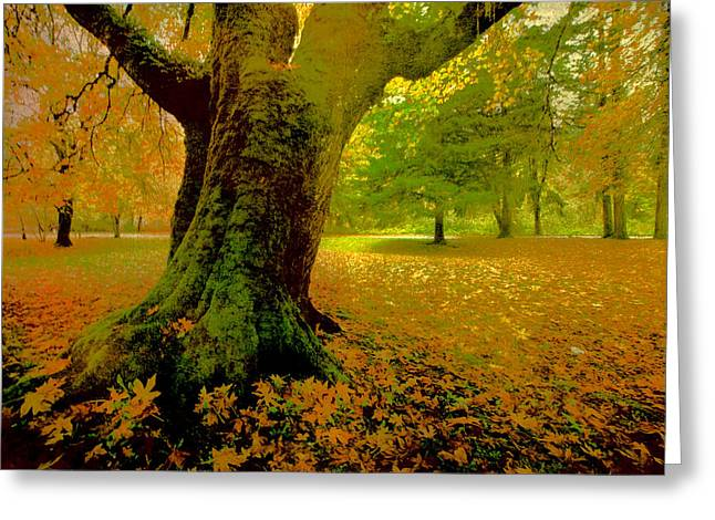 Backlit Prints Greeting Cards - Mighty Oak Greeting Card by Bonnie Bruno