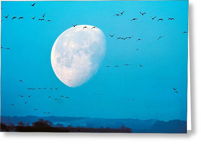 Migrate Greeting Cards - Migrating Birds In Blue Sky With Half Greeting Card by Panoramic Images