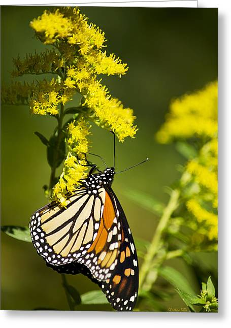 Butterfly On Flower Greeting Cards - Migrating Monarch Butterfly Greeting Card by Christina Rollo