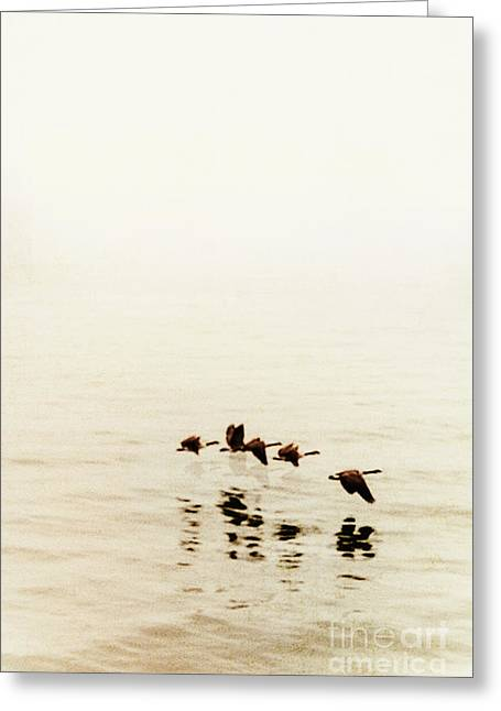 Low Wing Photographs Greeting Cards - Migration Greeting Card by Margie Hurwich