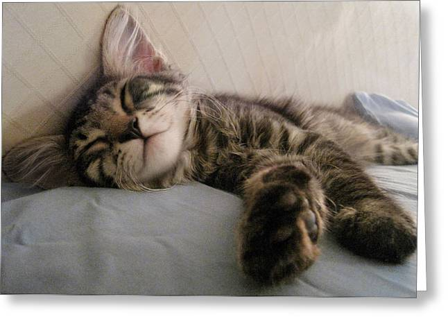Napping Cat Greeting Cards - Mikino enjoying an afternoon snooze Greeting Card by Jaeda DeWalt