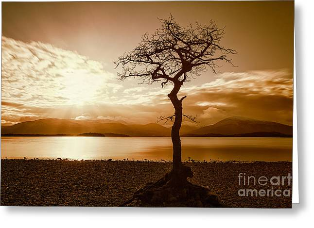 Landscapes Images Greeting Cards - Milarochy Bay Tree Loch Lomond Greeting Card by John Farnan