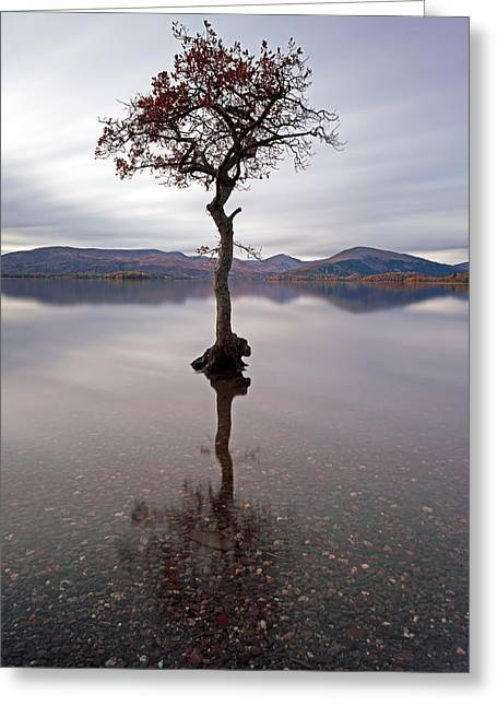Reflection In Water Greeting Cards - Milarrochy Bay Tree Greeting Card by Grant Glendinning
