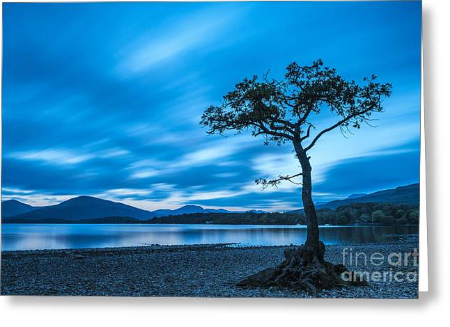 Greeting Cards - Lone tree Milarrochy Bay Greeting Card by Janet Burdon