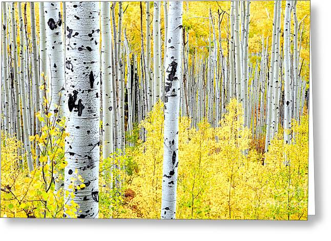 Turning Leaves Photographs Greeting Cards - Miles of Gold Greeting Card by The Forests Edge Photography - Diane Sandoval
