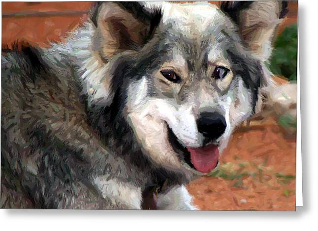 Puppies Mixed Media Greeting Cards - Husky With Blue and Brown Eyes - Impressionist Expression Greeting Card by Michael Braham