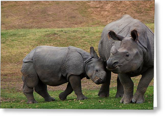 One Horned Rhino Greeting Cards - Mili and Sundari  Greeting Card by Steve LLamb