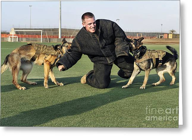 Dog Handler Greeting Cards - Military Working Dogs Subdue A Handler Greeting Card by Stocktrek Images