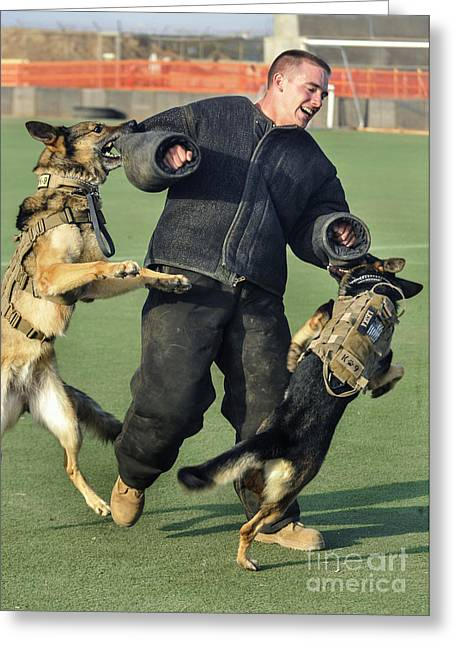 Working Dog Greeting Cards - Military Working Dogs Take Greeting Card by Stocktrek Images