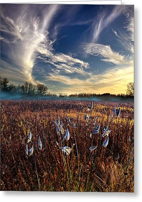 Geographic Greeting Cards - Milkweed Greeting Card by Phil Koch