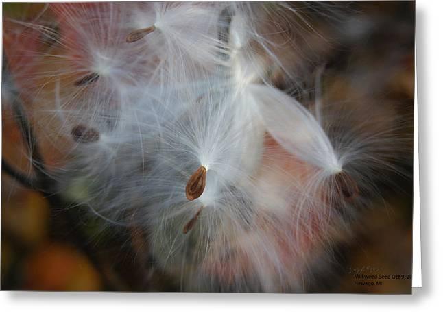 Milkweed Seed Greeting Card by Steph Maxson