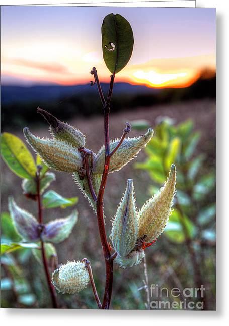 Virginia Artists Greeting Cards - Milkweed Sunrise I - Blue Ridge Parkway Greeting Card by Dan Carmichael