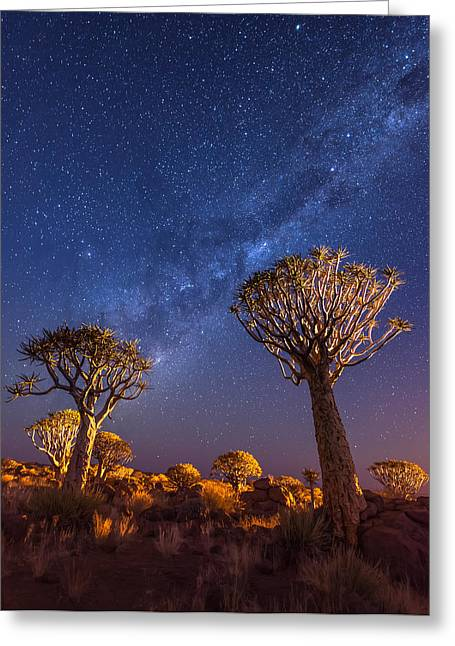 Milky Way Greeting Cards - Milky Way Over Quiver Trees Greeting Card by Duane Miller