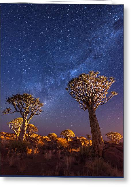 Milky Way Greeting Cards - Milky Way Over Quiver Trees - Namibia Night Photograph by Duane Miller Greeting Card by Duane Miller