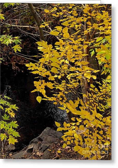 Beautiful Scenery Greeting Cards - Mill Creek 4 Greeting Card by   FLJohnson Photography