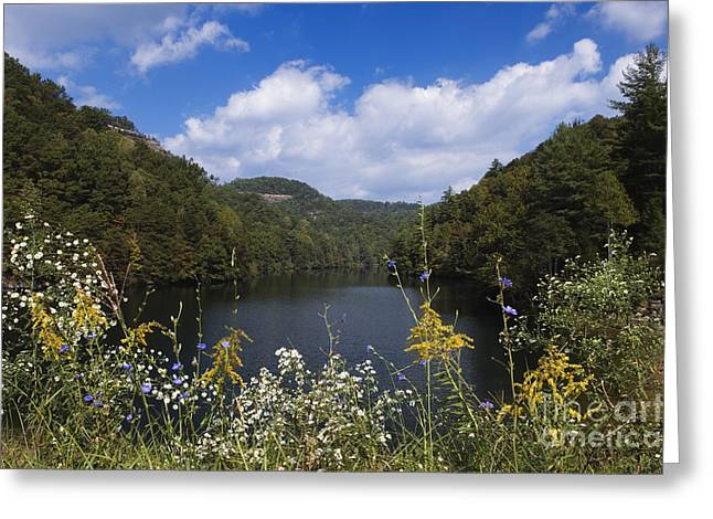 Asters Greeting Cards - Mill Creek Lake - D001303 Greeting Card by Daniel Dempster