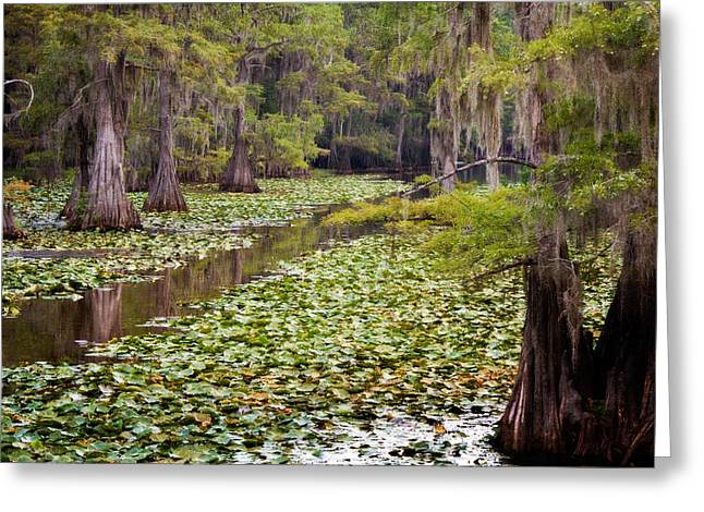 Alga Greeting Cards - Mill Path Greeting Card by Lana Trussell