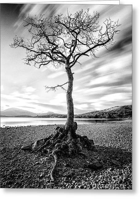 Scottish Landscapes Greeting Cards - Millarochy Bay Tree Greeting Card by John Farnan