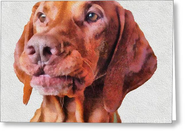 Hungarian Pointer Greeting Cards - Milo Maxwell CED Greeting Card by Laurence Canter