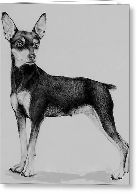 Mini Drawings Greeting Cards - Min Pin Greeting Card by Jean Cormier