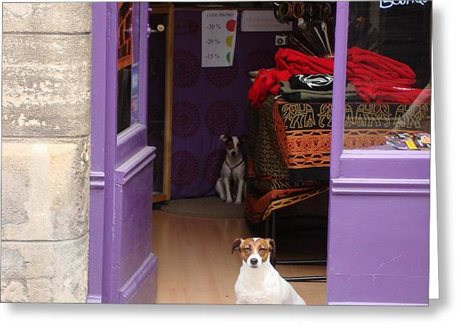 Minding the Shop. Two french dogs in Boutique Greeting Card by Menega Sabidussi