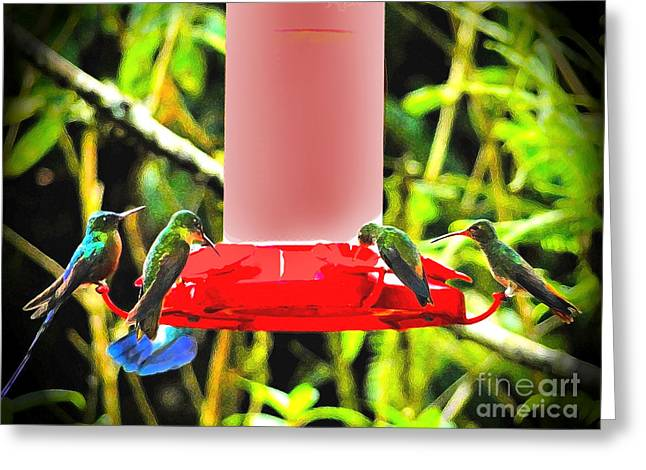 Gaggle Greeting Cards - Mindo Hummer Gathering Greeting Card by Al Bourassa
