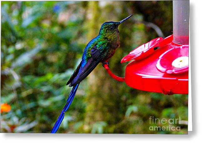 Hovering Greeting Cards - Mindo Hummers Are So Pretty Greeting Card by Al Bourassa