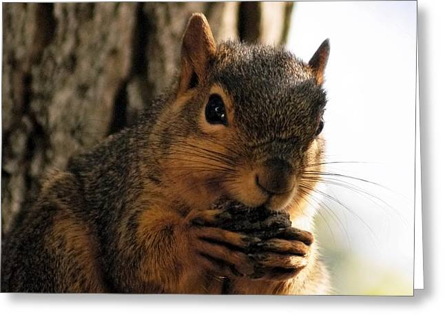 Eastern Fox Squirrel Greeting Cards - Mine Greeting Card by Natasha Mohr