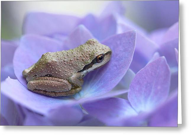 Brown Frog Greeting Cards - Mini Frog on Hydrangea Flower  Greeting Card by Jennie Marie Schell