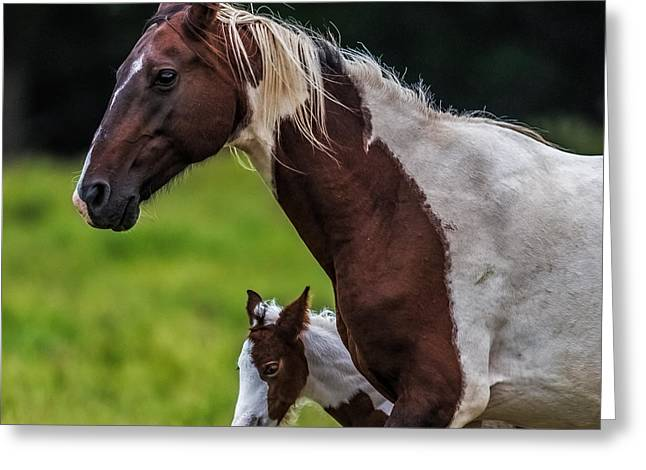 Horses With Nature Greeting Cards - Mini Me Greeting Card by Paul Freidlund