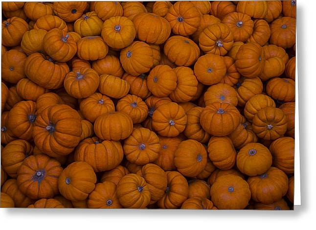 Mini Photographs Greeting Cards - Mini Pumpkins Greeting Card by Garry Gay