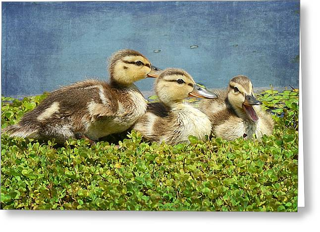Baby Mallards Greeting Cards - Mini Quackers 2 Greeting Card by Fraida Gutovich