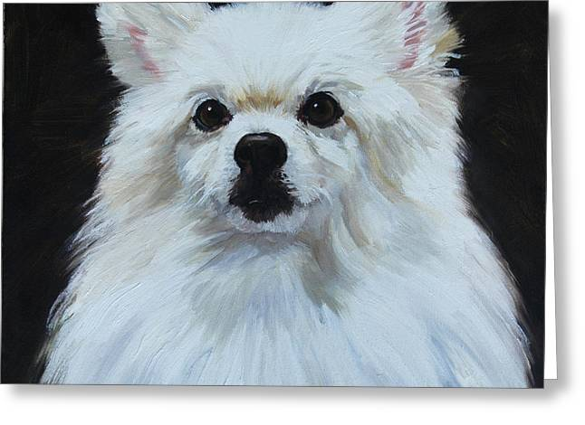 Breeds Greeting Cards - Miniature American Eskimo Dog Greeting Card by Alice Leggett