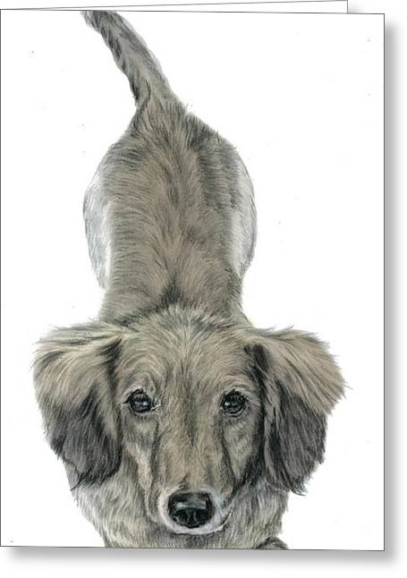 Quarter Horses Greeting Cards - Miniature Dachshund Puppy Greeting Card by Elizabeth Sage