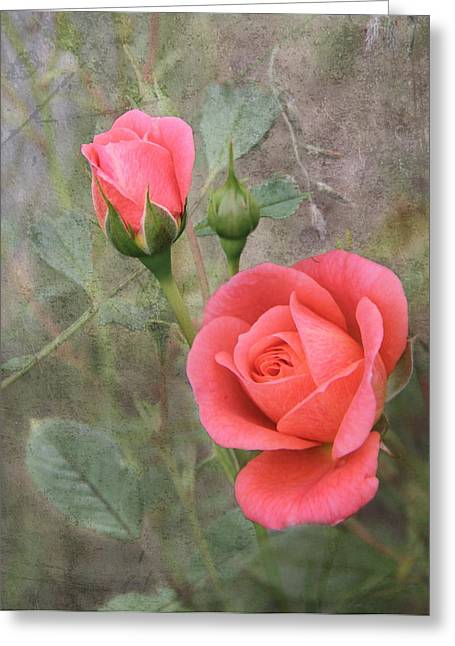 Tangerine Greeting Cards - Miniature Roses Greeting Card by Angie Vogel