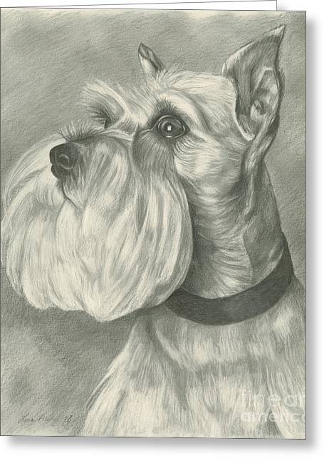 Puppies Drawings Greeting Cards - Miniature Schnauzer Greeting Card by Lena Auxier