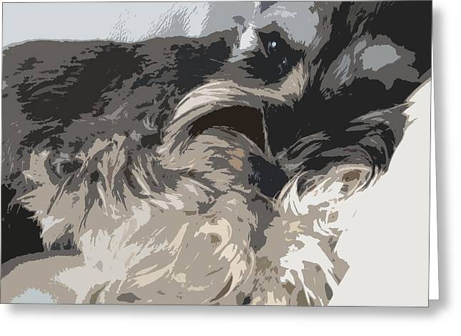 Miniature Schnauzer Greeting Card by Sergey Sogomonyan