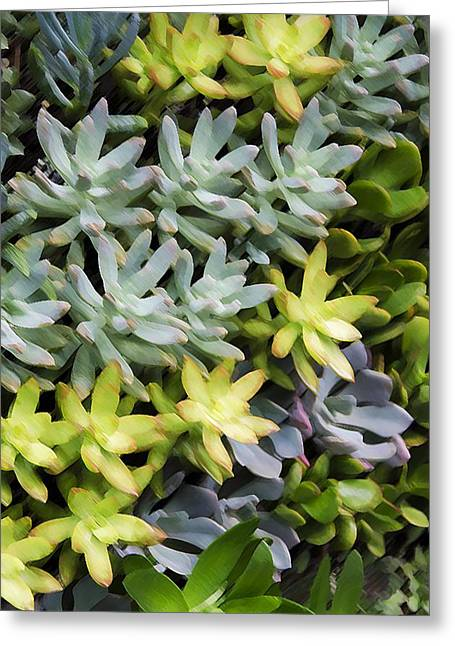 Rosette Paintings Greeting Cards - Miniature succulent plants 4 Greeting Card by Lanjee Chee